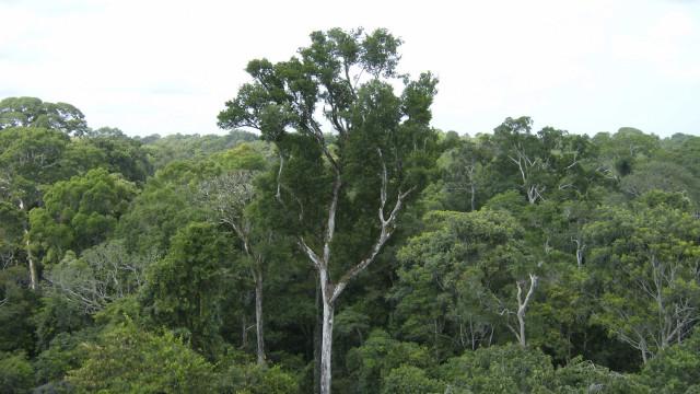 Fundo Amazónia suspenso. 'Pulmão' do mundo (ainda) mais vulnerável