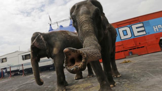Marcelo dá 'luz verde' a proibição de animais selvagens nos circos