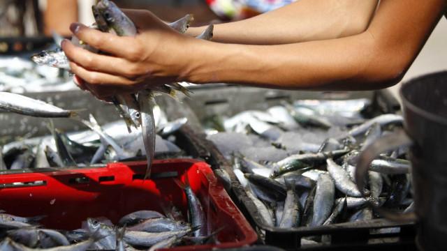 """Declarações da ministra sobre captura da sardinha são """"inaceitáveis"""""""