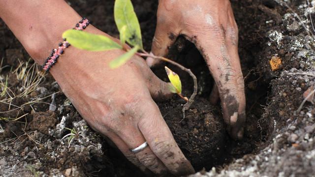 """Seca: Governo fala em """"bons resultados"""", agricultores em situação grave"""