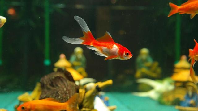 Hacker só precisou de um aquário inteligente para invadir um casino