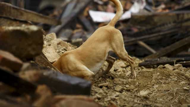 """Cão foi atropelado por acidente e depois de propósito para """"não sofrer"""""""