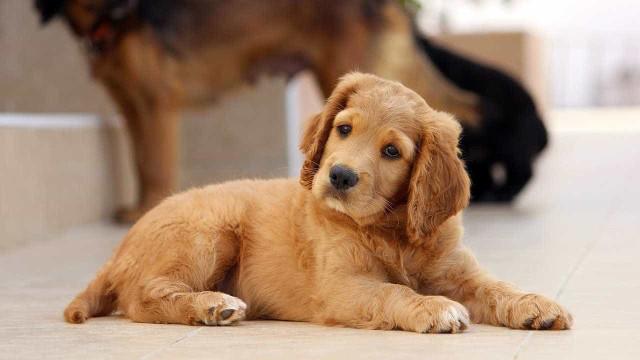 Reino Unido proíbe lojas de animais de venderem cães e gatos bebés
