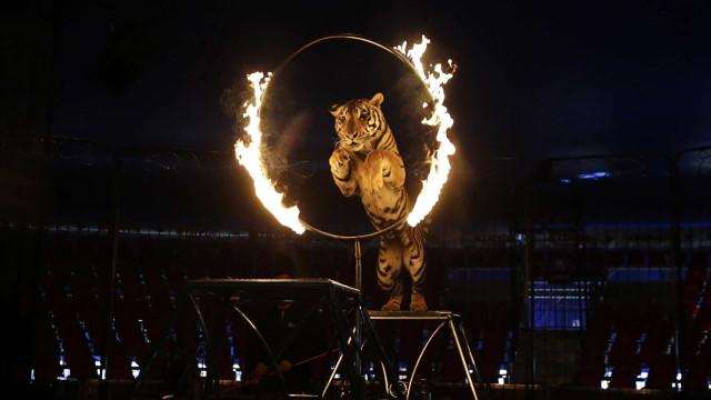 Petição contra animais nos circos deu hoje entrada no Parlamento