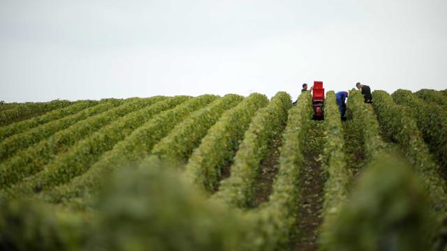 Aveleda investe sete milhões na região do Vinho Verde