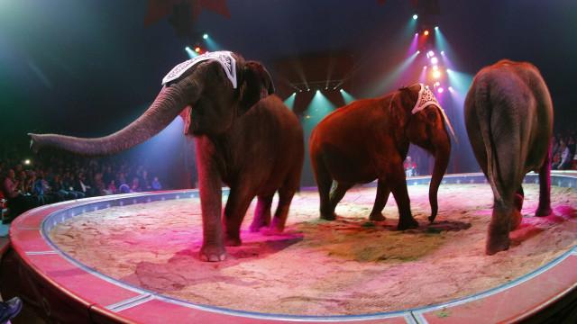 Pela primeira vez, circo de Natal do Porto não vai ter animais