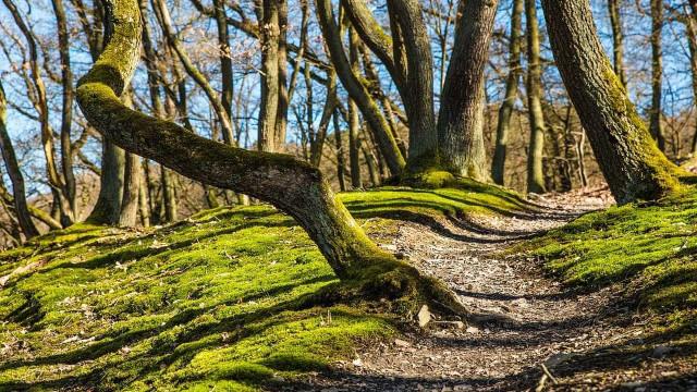 Governo reforça Fundo Florestal Permanente com três milhões de euros