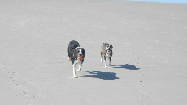 Animais de companhia permitidos em duas praias de Esposende