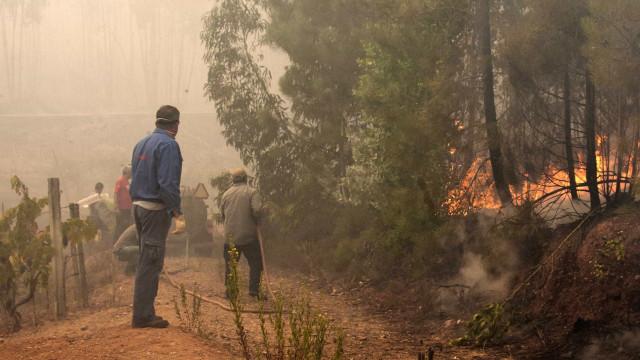 Incêndios: Gavião quer apoios do Governo iguais aos dos outros concelhos