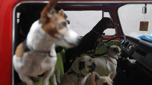 PAN quer que animais possam entrar em estabelecimentos comerciais