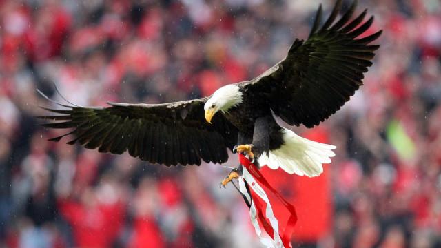 Emigrante viajou desde o Canadá para assistir ao Montalegre-Benfica