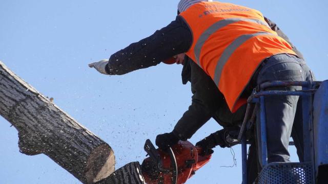 Limpeza de terrenos. Queda de árvore faz ferido grave em Pombal