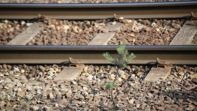 Homem trucidado por comboio em Loulé