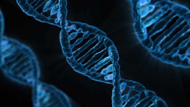 Lose it: App de dietas traça-lhe plano de emagrecimento via ADN