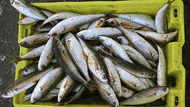 Portugal deve analisar alternativas para a frota por causa da sardinha