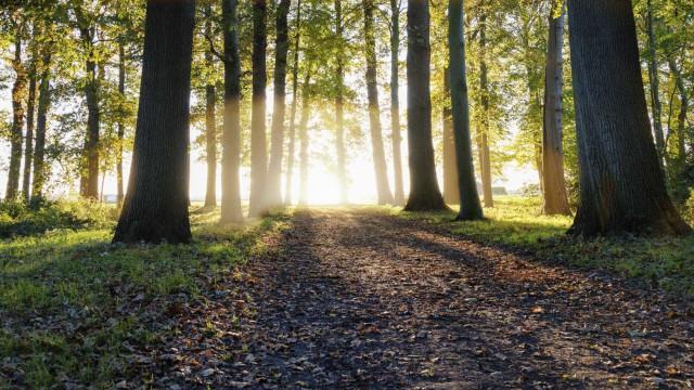 Videovigilância cobre 74% da floresta e vai ser alargada em breve