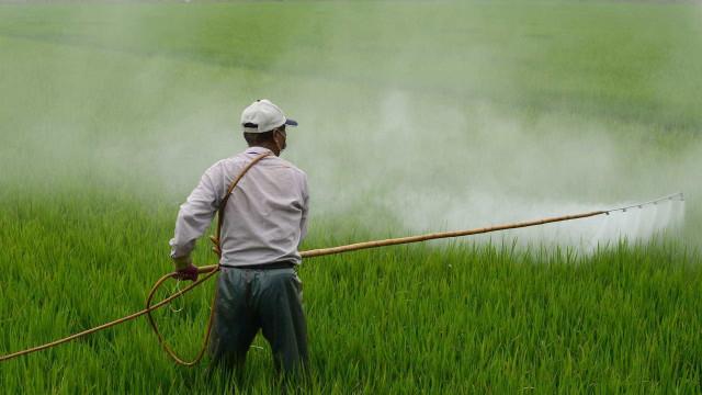 Flexibilização da lei para pesticidas divide a opinião de especialistas