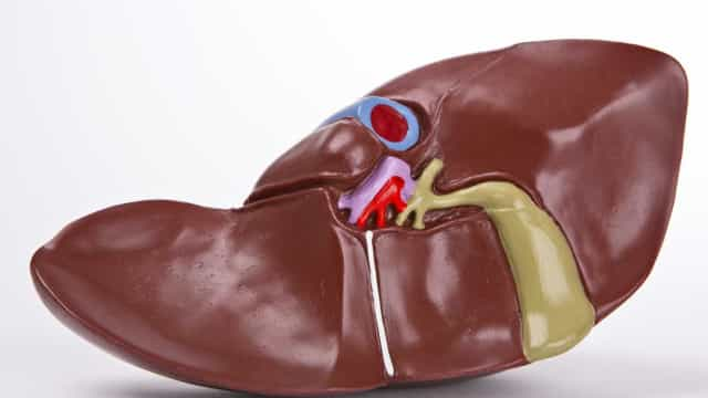Fígado gordo, a doença hepática mais frequente