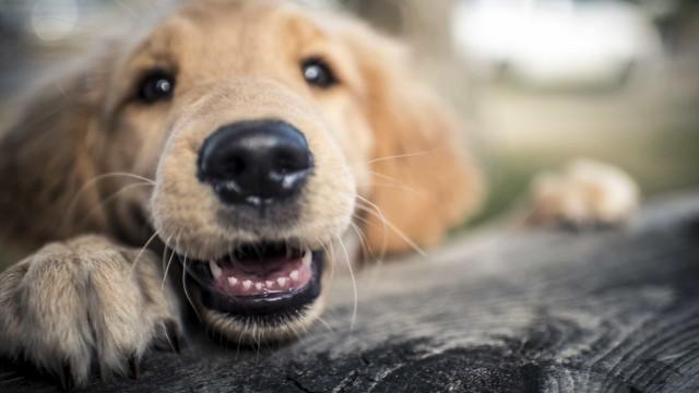 Bastonário: Portugal coloca muitos obstáculos a quem quer ter um animal
