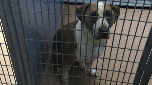 Municípios da Madeira estão a aplicar lei que proíbe eutanásia de animais