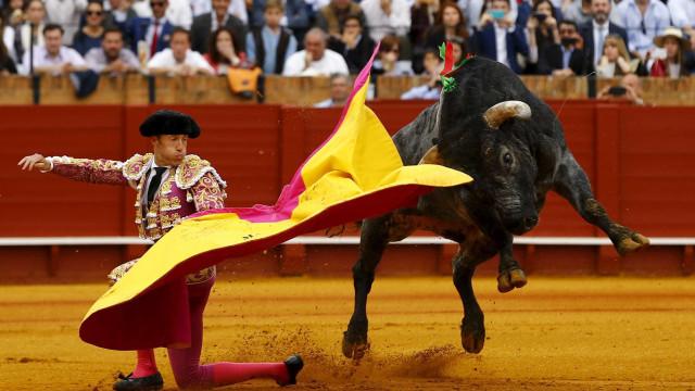 """""""Proibir touradas é indigno de um Estado democrático"""""""