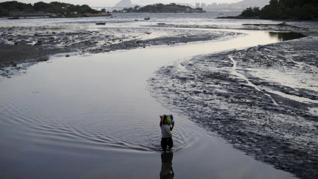 Investigadores avaliam potencial dos estuários para a aquicultura