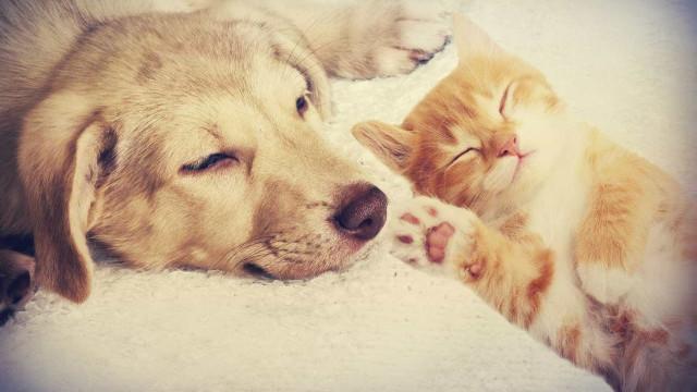 Partidos de acordo para permitir animais em espaços de restauração