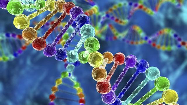 Modificação genética vai ser testada pela primeira vez na Europa