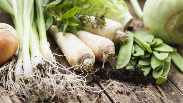 Produtores de fruta e legumes querem exportar 500 milhões para Espanha