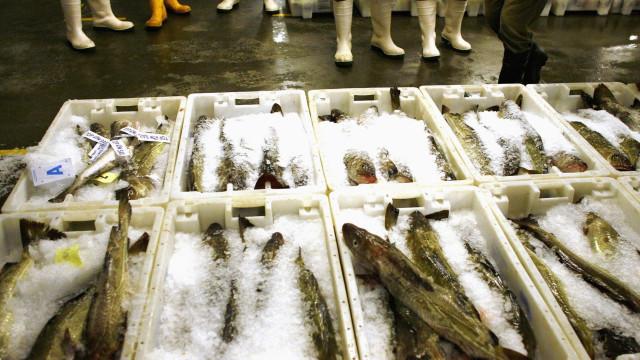 Mais de sete toneladas de peixe apreendidas no porto de Sesimbra