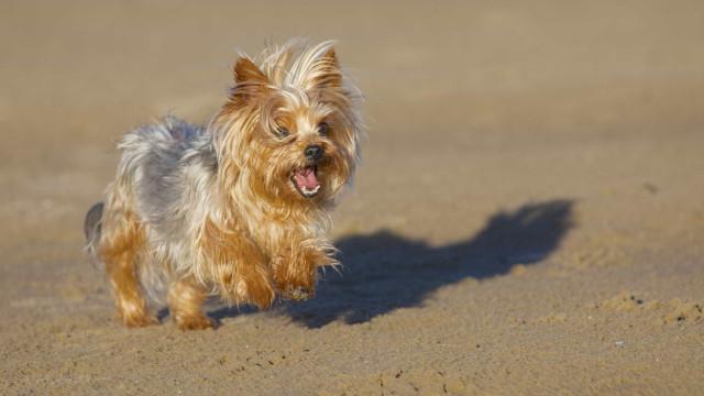 """A viver em condições """"deploráveis"""", cão alimentava-se do cadáver de outro"""