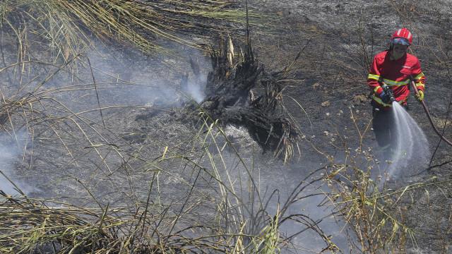 Incêndio em mato obriga a cortar trânsito na A12