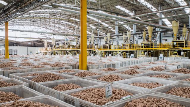 Lucro da Corticeira Amorim aumenta 7,4%, para 37,7 milhões, até junho