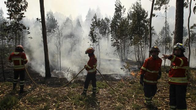 Agricultores afetados por incêndios recebem esta semana 13,3 milhões