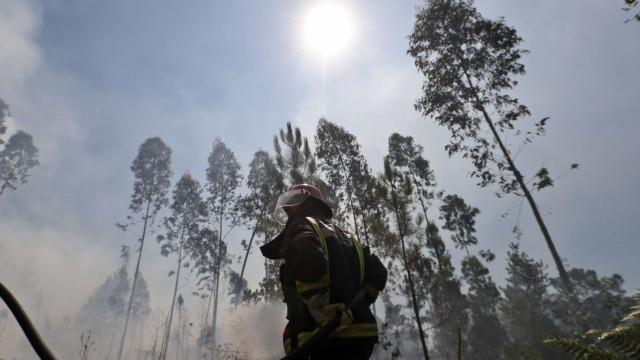Mais de 200 operacionais combatem fogo no concelho da Sertã