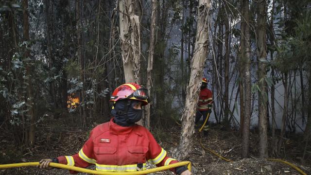 Rescaldo continua e autarquia pensa já na reflorestação em Sintra-Cascais