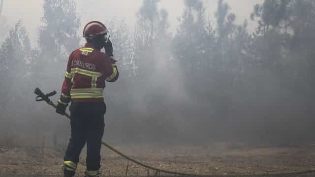"Fogo no Parque do Douro causa ""enormes prejuízos"" nas culturas agrícolas"