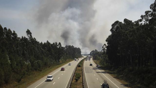 Ambientalistas denunciam aplicação de herbicidas perigosos nas estradas