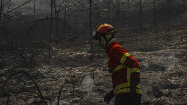 Autarca de Gondomar afirma que fogos no concelho tiveram mão criminosa