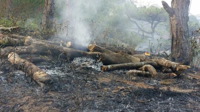 Idoso apanhado a atear fogo a Parque Natural. Era a quinta tentativa
