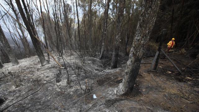 Pedrógão Grande: Rebentos de eucaliptos já despontam na área ardida