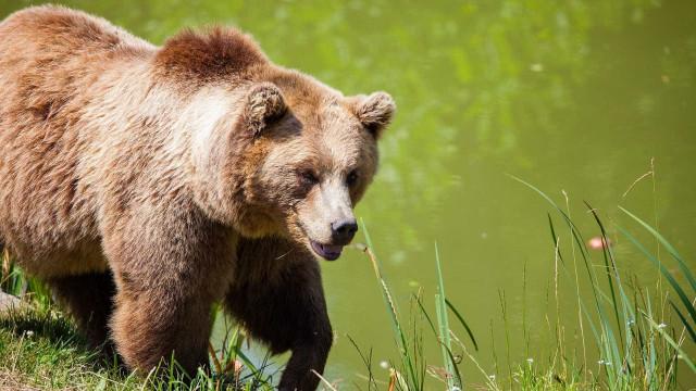 Mãe e bebé de 10 meses morrem após ataque de urso no Canadá