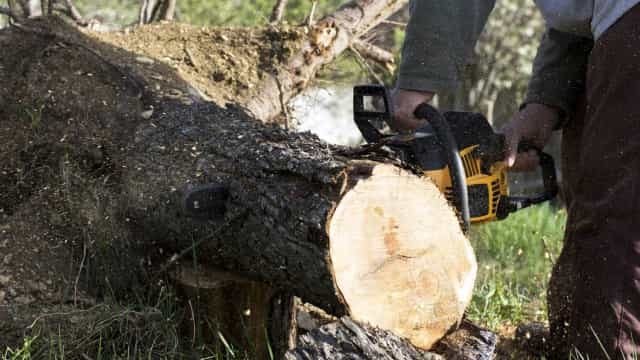 Desflorestação: Noruega pode reduzir apoio financeiro ao Brasil