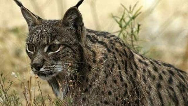 "Nova lei ""vai diminuir de forma significativa captura ilegal de animais"""