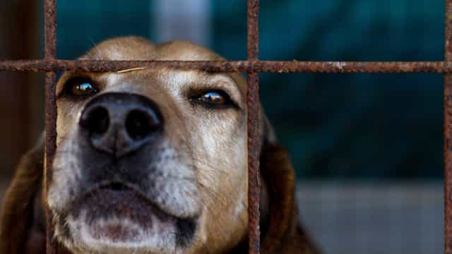 """Veterinários acusam Governo de """"irresponsabilidade brutal"""" sobre abandono"""