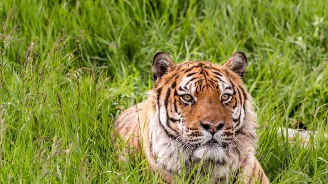 """""""Posar ao lado de tigres não faz de ti um rei"""", avisa Tinder"""