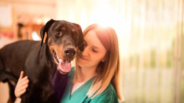PAN quer 500 mil euros para ajudar famílias na esterilização de animais