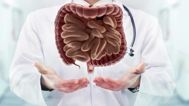 O intestino pode ser uma das chaves para o envelhecimento saudável