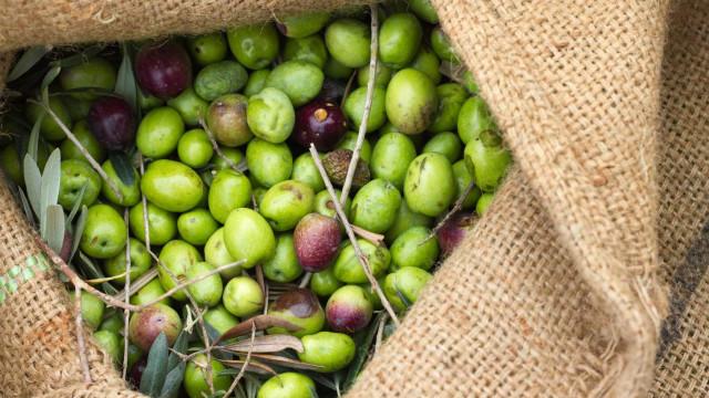 Três mulheres e um homem detidos por furto de 500 kg de azeitona