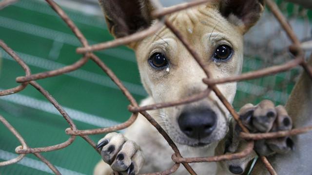 Municípios açorianos preparam-se proibição do abate nos canis em 2022